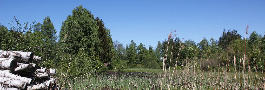Unser Moor in Bad Kohlgrub
